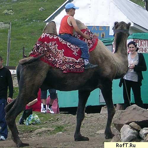 Домбай 2006