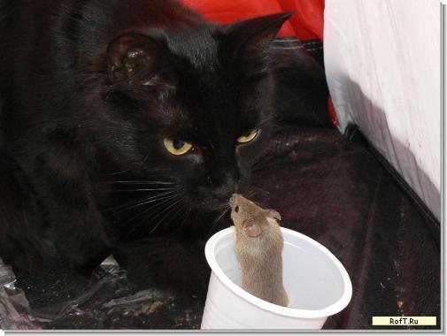 cat-o-mouse.jpg