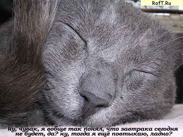 Растаманский кот