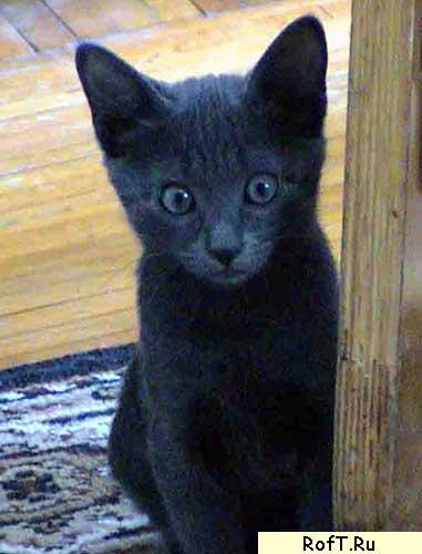 Растаманский кот в детстве