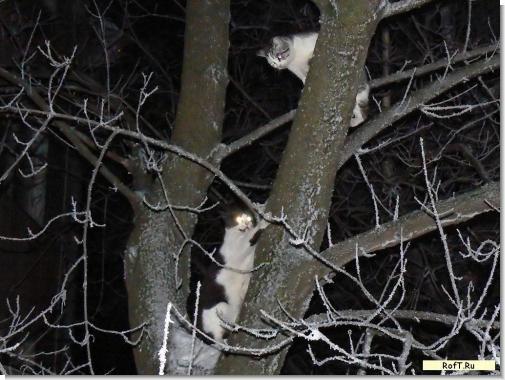 cats200108.jpg