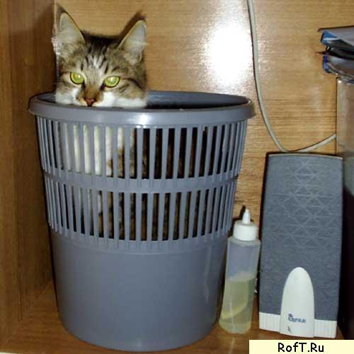Мусор-кот
