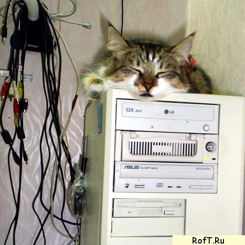 PC Кот