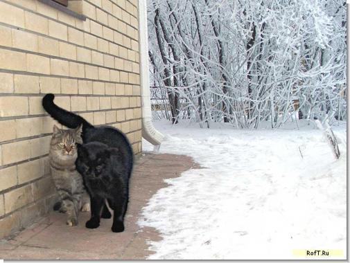 cat-n-cat.jpg