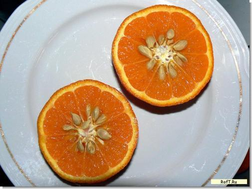 Заподляшный апельсин