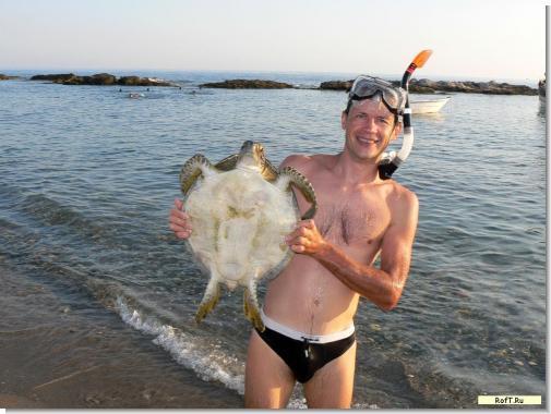 tur11_turtle1.jpg