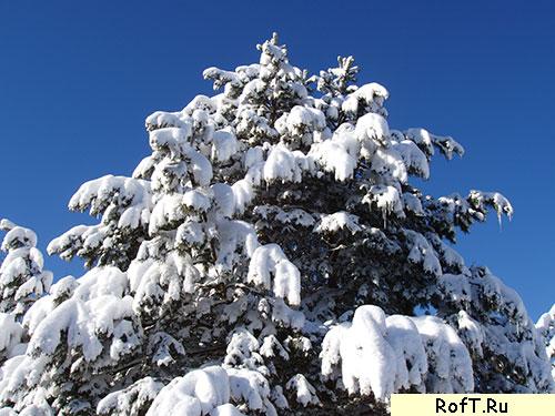 zima4.jpg